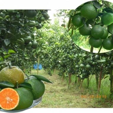 Hợp tác xã Nông nghiệp đa ngành Tân Hội